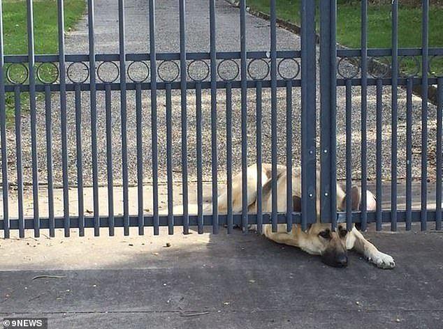 Chú chó buồn bã ngồi đợi chủ
